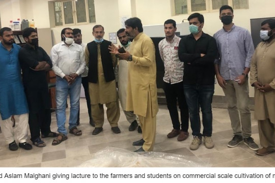 Plant Pathology Department conduct two-day training workshop on mushroom cultivation
